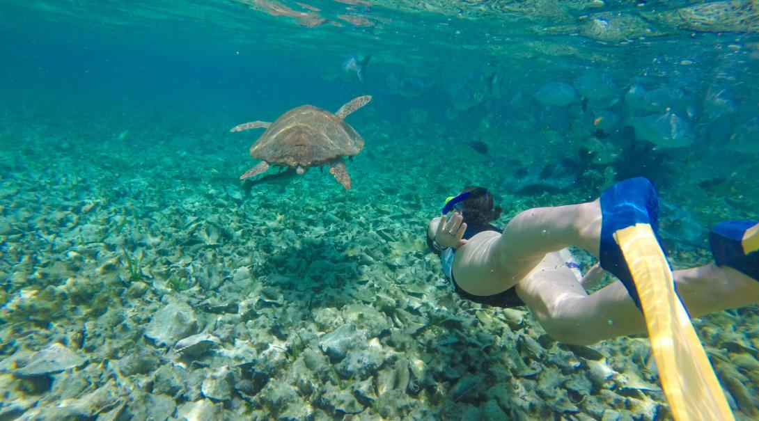 A Study Abroad Programme student exploring the underwater world after learning how to dive